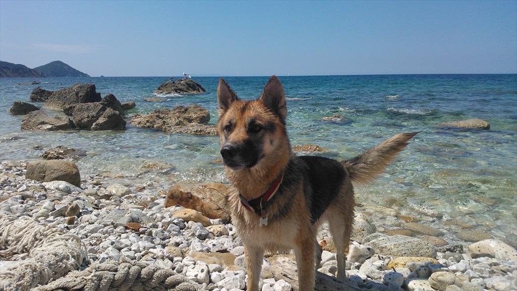 Spiagge per cani all'Isola d'Elba